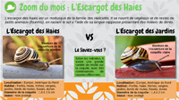 L'escargot des haies