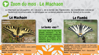 Le Machaon
